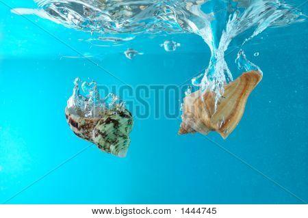 Seashells In Water