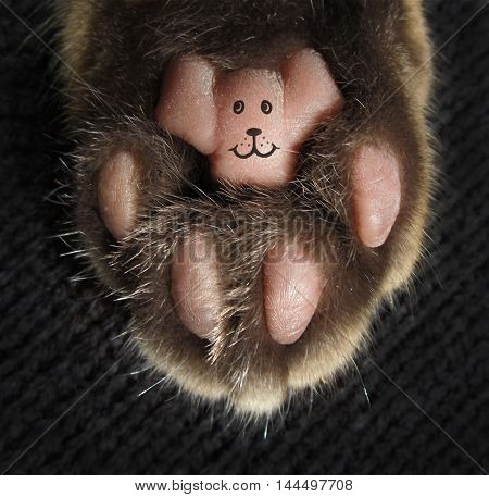 There is a tattoo on a cat's paw. The tattoo likes a smiling face.