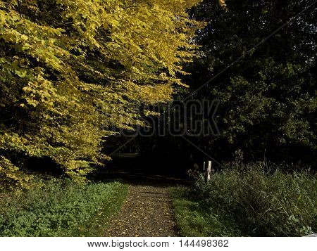 autumn in a german forrest near borken