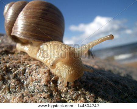 Snail on the beach animal sea stone summer sky house sun sunburn horns