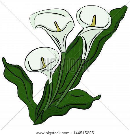 Hand drawn illustration of a flowers callas cartoon