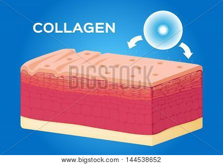 collagen and skin vector , serum , drop . collagen makes cell better
