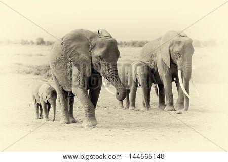 Elephant In National Park Of Kenya. Vintage Effect