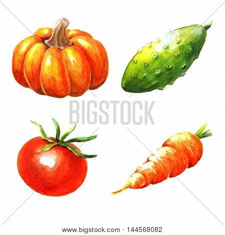 Vegetables watercolor illustration on a white background