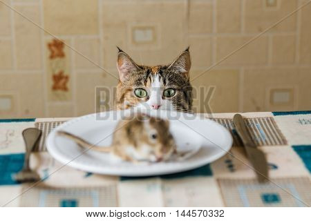 Cat stares to little gerbil mouse on the table with plate and serving cutlery. Concepts of prey, food, pest. poster