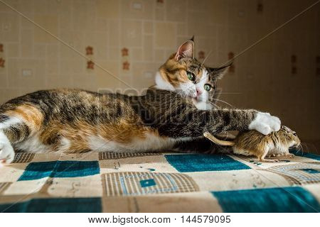 Cat catches a gerbil mouse on the table with serving cutlery. Concepts of prey, food, pest.