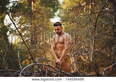 Lumberjack chopping wood with an ax. Woodcutter with naked torso in the coniferous forest. Felling trees. Logging. Manual labor. Brutal man.