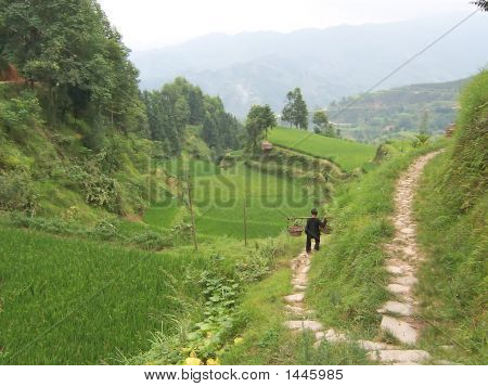 A Woman Going On The Ricefields For Daywork, Hunan, China