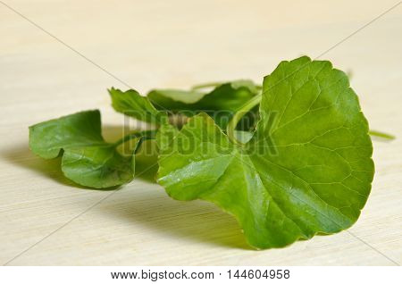 Centella Asiatica Or Thankuni In Indian, Buabok Leaf In Thailand Isolated On Wooded Board