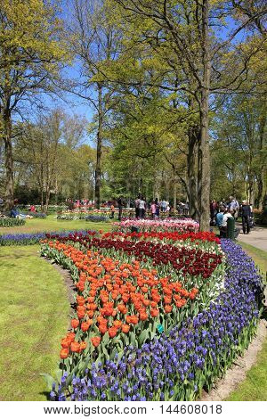 KEUKENHOF, NETHERLANDS - MAY 5, 2016: Tourists and colored tulips in spring in the Keukenhof Park Holland Netherlands.