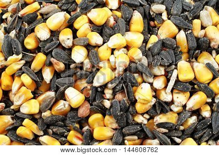 A macro image of wild bird food