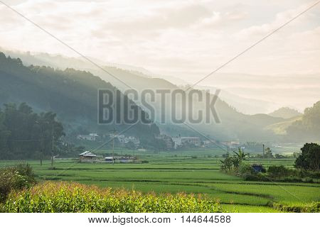 Agriculture Green Rice fields and rice terraced with sunset on mountain at SAPA Lao Cai Mu Cang Chai Vietnam. The most of area is rice terraced. nature and landscape rice fields
