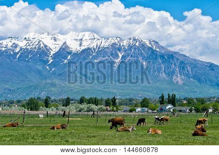 Ranch in Utah with cows and mountains