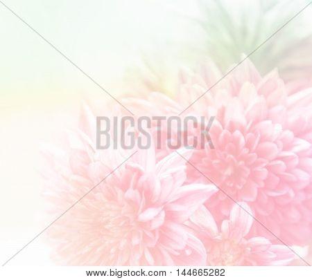 Beautiful Soft Flower Background
