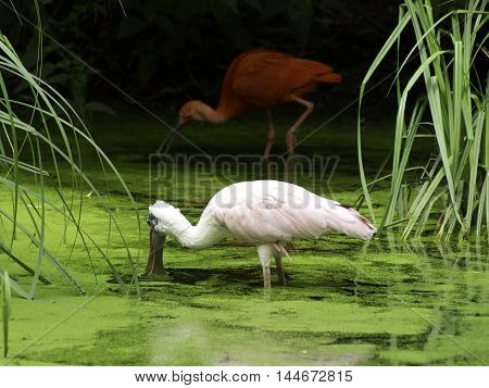 waterbirds at a lake in the german muensterland