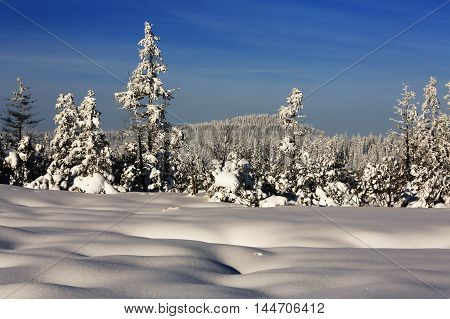 Winter landscape and snow wrapped trees in Sumava Czech republic