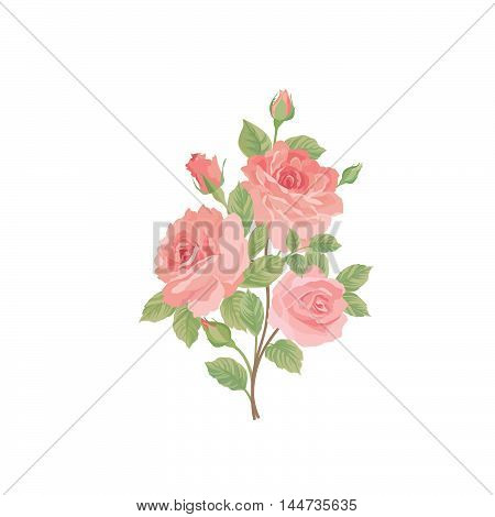 Flower rose bouquet. Floral posy isolated over white background Watercolor vector flourish summer decor design