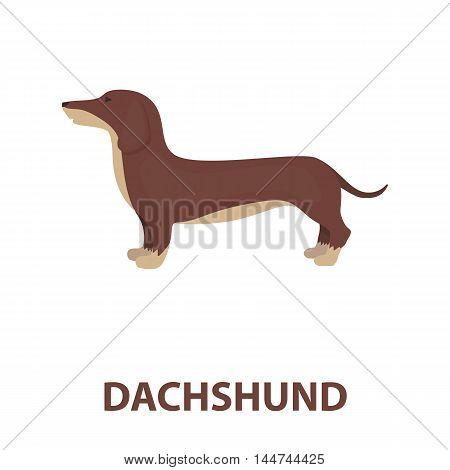Dachshund vector illustration icon in cartoon design