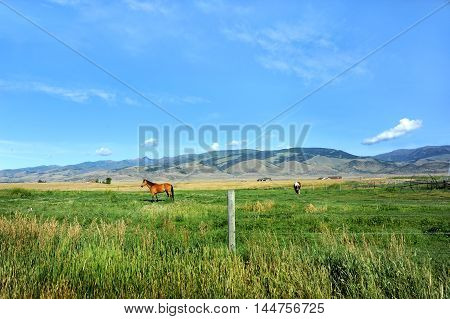 Beautiful farm land with horses and irrigation equipment nestle at the foothills of the Gallatin Mountainn Range. This place called Paradise Valley is in Montana.