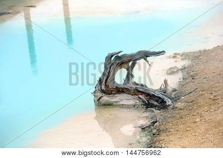 Broken tree sits in aqua water of Palette Springs in Norris Geyser Basin in Yellowstone National Park.