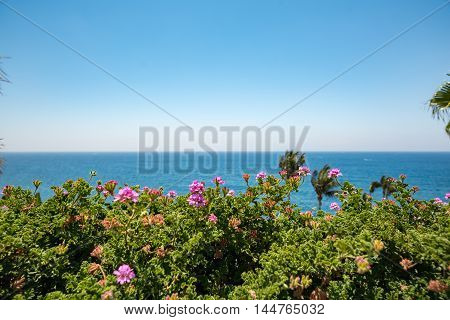 Spain. sea and nice flowers in summer