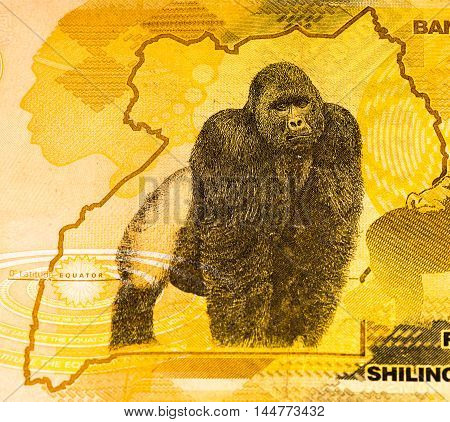 50000 Ugandan shillings bank note. Ugandan shilling is the national currency of Uganda