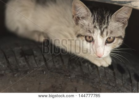 little cat hide on the tire of car