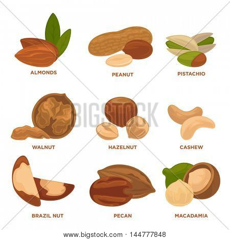 Ripe nuts and seeds vector illustration. Highly detailed nut icons. Vector Illustration.