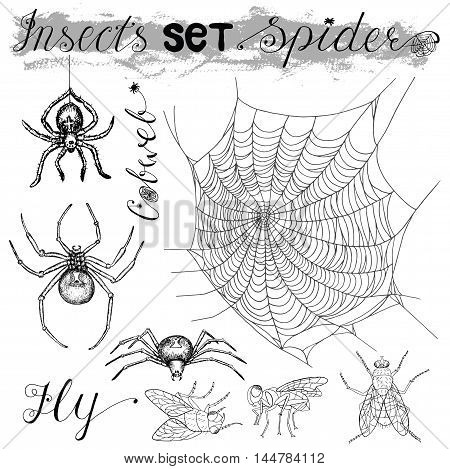 Graphic set with isolated spiders (black widow and tarantula), fly and cobweb. Black and white vector illustration with hand drawn elements. Halloween collection.