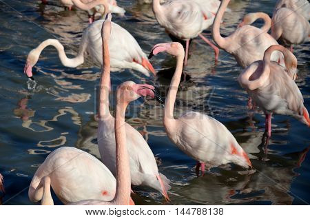 Flamingos in Camargue Natural Park in France