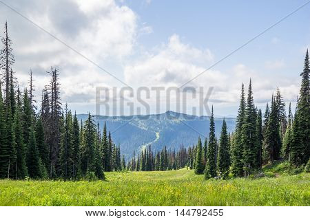 Beautiful View Of The Alpine Meados At Sun Peaks