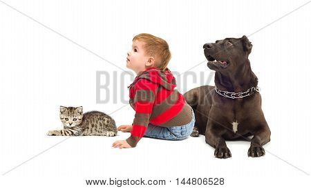 Curious boy, dog and a kitten isolated on white background