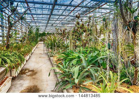 Interior botanic glasshouse building greenhouse complex, botanical garden