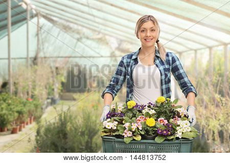 Joyful female gardener holding a rack of flowers in a greenhouse