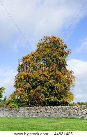 Beautiful Autumn Trees on a sunny day