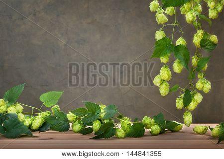 dark background with Czech fain aroma hops