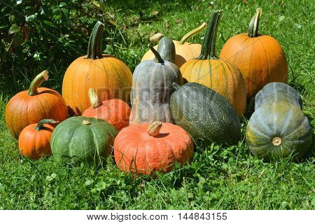 Pumpkins and squashes fresh harvest on grass