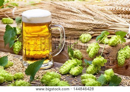 glass of beer with hops and raw material for beer production