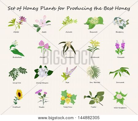 Vector honey planty set for produsing the best honey