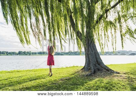 Woman with long hair in red dress reaching to willow tree and wind by Potomac River and Arlington Memorial bridge in Washington DC poster