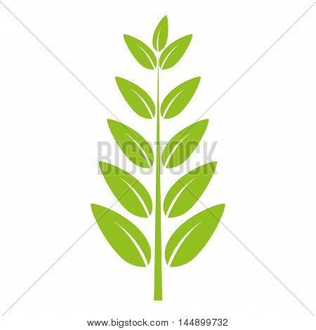 leaves natural green plant ecology sheet foliage enviroment vector illustration