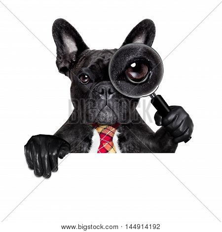 Magnifying Glass Dog