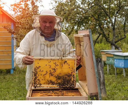 Beekeeper is working with bees and beehives on the apiary. Beekeeper on apiary. Beekeeper pulling frame from the hive. Apiarist is working in his apiary.