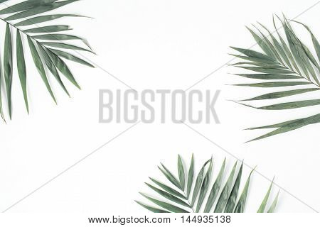 palm branches isolated on white background. flat lay top view