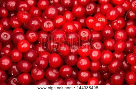 Sour cherries in a saucepan prepared for cooking jam