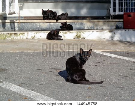 Family of the black cats around the building