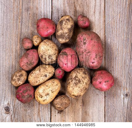 Garden potatoes with soil and roots on rustic wooden boards