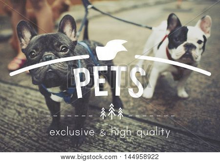 Puppies Pets Man's Bestfriend Concept