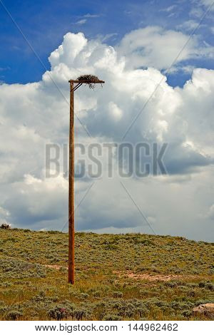 Bird of Prey Hawk's Falcon's Erected Man Made Nest on a Pole