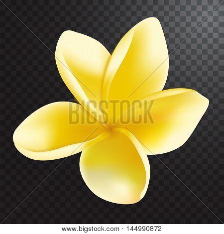 Vector illustration of realistic frangipani flower on half transparent background.